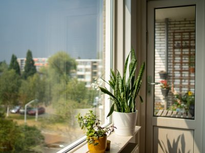 sanseveria-vetplanten