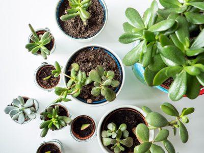 vetplanten-soorten